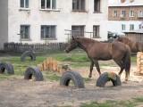 Во дворах и на улицах поселка мирно пасутся кони, а частные дома свободно соседствуют с пятиэтажками