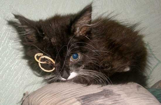 Маленькая Феня пережила операцию. Видит только одним глазом, на месте выбитого — наложены швы