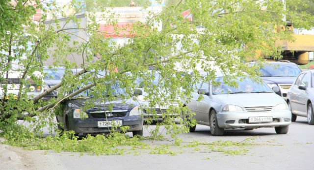 Прошлым летом на улице Ленина в районе Набережной на автомобиль упала ветка тополя. Тогда никто особо не пострадал. Чтобы не допустить подобных ЧП впредь, старые деревья решено спилить.