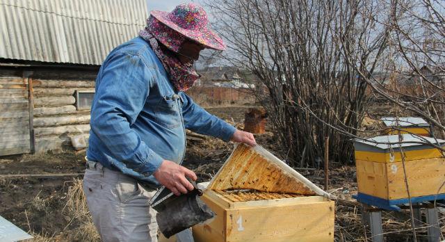 Виктор проверяет рамки с медом, куда пчелы приносят и перерабатывают нектар. Если семья сильная — первый мед можно ждать уже в мае.