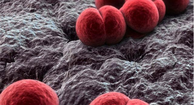 Neisseria meningitidis - возбудитель менингококкового менингита. Фото с сайта       http://imedic.biz/