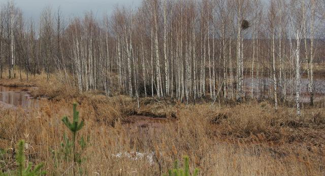 Территория рядом со шламоприемником