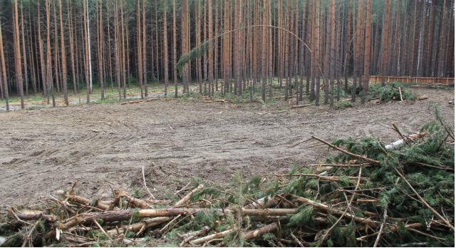 Чтобы убедиться, что лес на Хрустальной все же рубят, пришлось залезть  на забор.