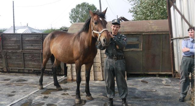 Слава Никитин перевелся в кавалерию из кинологов.