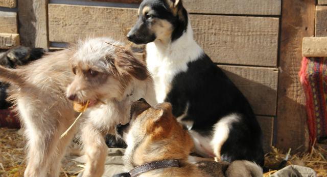 как знакомить взрослых собак