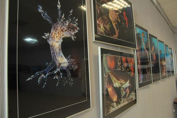 Выставку «Загадки и причуды северных морей» в Свердловской области представляют только во второй раз. Для Первоуральска это уникальная возможность. Фото Анны Неволиной