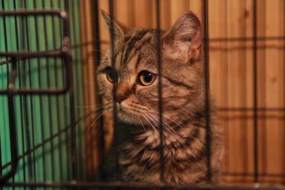 На попечении Общества 93 кошки. Фото Анны Неволиной