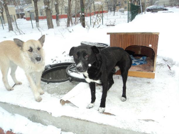 Прикормленные дворняжки с Володарского, 12 Фото предоставлено Еленой Яшиной