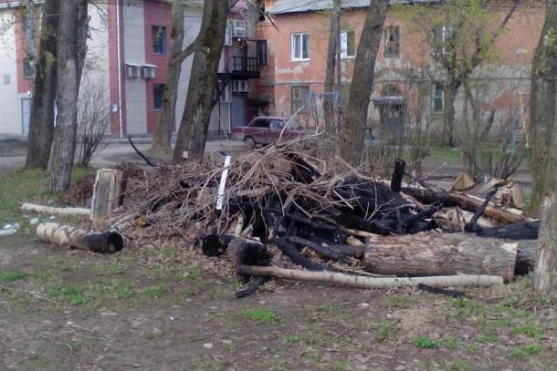 Спиленные деревья во дворе на ул. Ватутина Фото Елены Красулиной