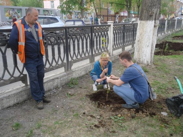 Оксана и Олег Мадьяровы сажают деревья под присмотром озеленителей горхоза. Фото Андрея Попкова