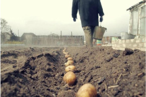 Фото с сайта img3.vashgorod.ru