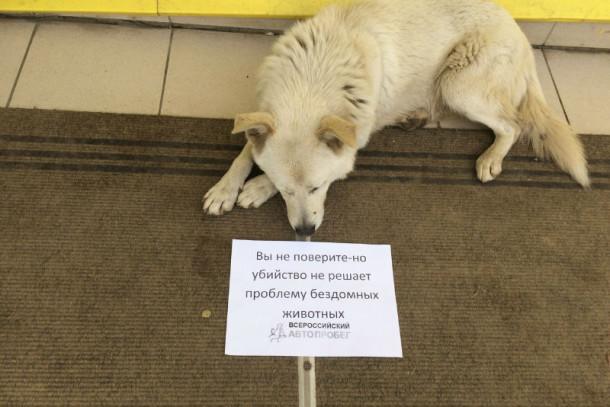 Фото с официального сайта общества защиты животных