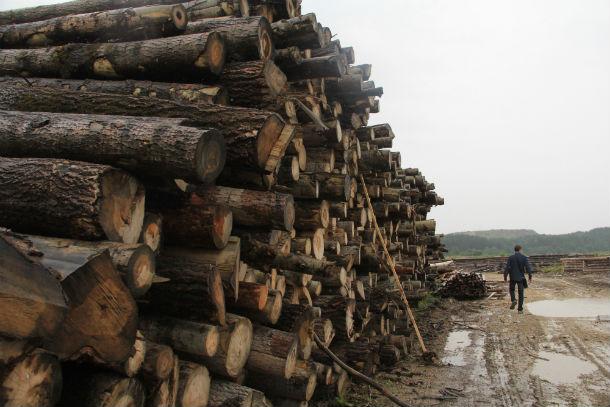 Вокруг Доломитового несколько лесопилок, обычно бревна складируются так. Фото Анны Неволиной