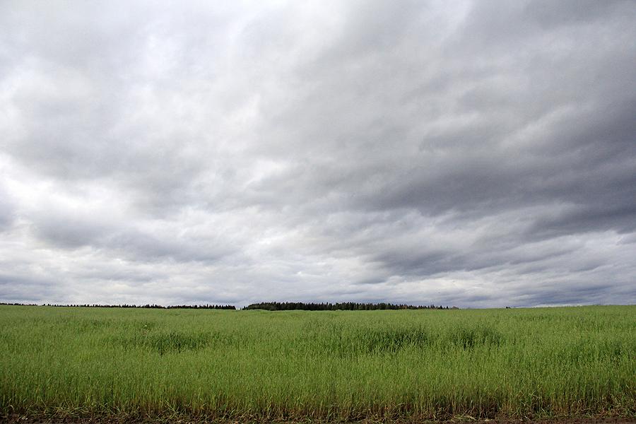 В этом поле, по мнению местных жителей, живут инопланетяне Фото Анны Неволиной