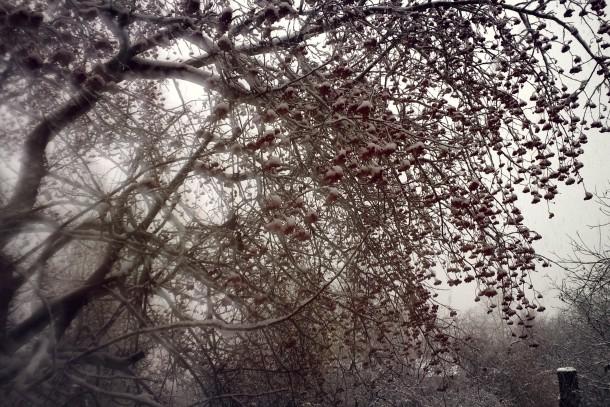 Фото Алены Светкиной