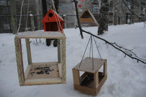 Кормушки повесили не очень высоко от земли, чтобы ребята могли самостоятельно загружать в них корм для птиц. Фото Анны Неволиной