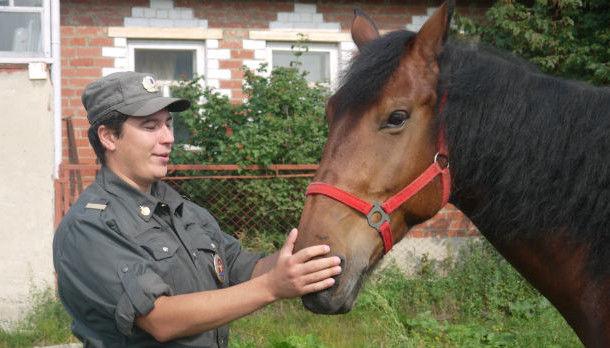 Хозяин Вояжа уверяет, что продал коня потому, что животное было очень дорого содержать  Фото из архива редакции