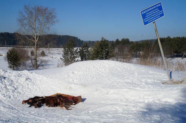"""Останки животного выбросили прямо под знак """"Водоохранная зона""""  Фото Ольги Хмелевой"""
