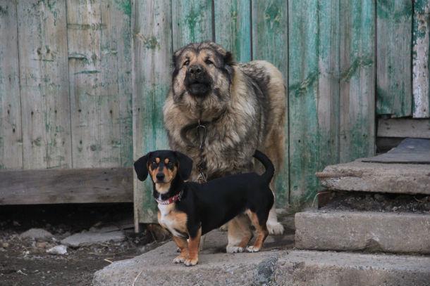 Собаки - одно из главный препятствий на пути пожарных и полицейских Фото Марии Поповой