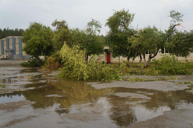 Упавшие деревья на стадионе
