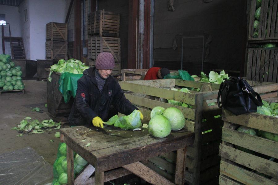 Некоторые переборщики — настоящие мастера своего дела — они приезжают в СХПК «Битимский» уже больше десяти лет. Фото Анны Неволиной