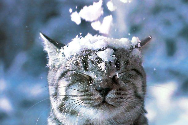 ВВоронеже выходные будут морозными иснежными