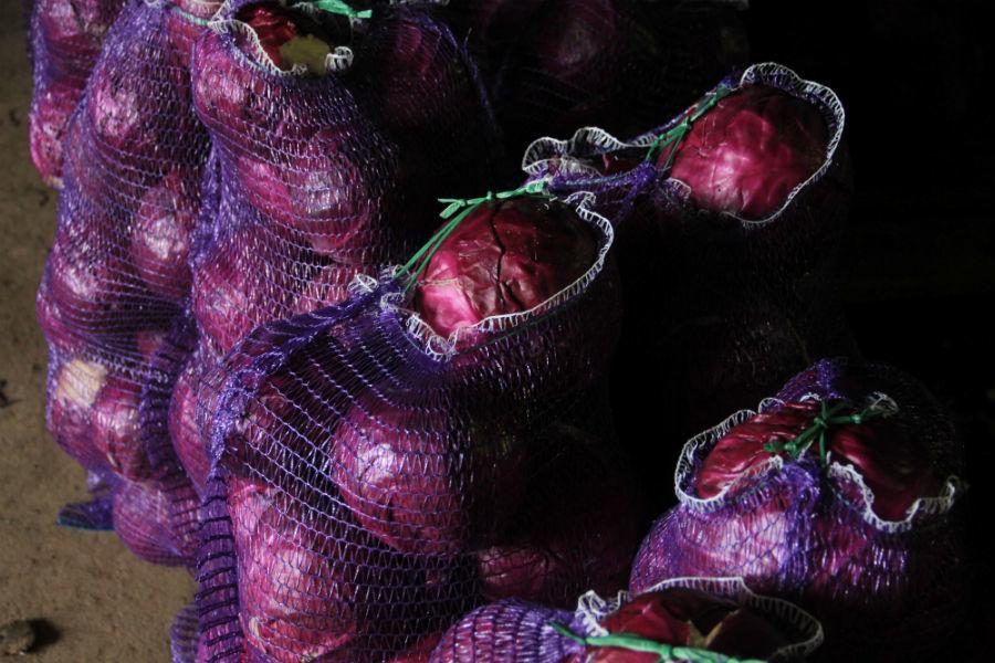 В сельхозкооперативе «Первоуральcкий» белокачанную капусту упаковывают в сетки зеленого цвета, а краснокачанную — в фиолетовые. Выглядит очень красиво.Фото Анны Неволиной