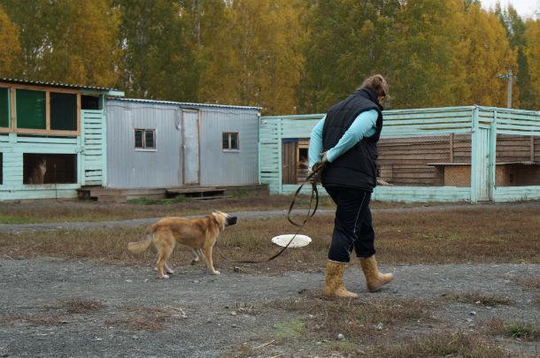 Выгулять собаку - целая наука. Особенно, если животное гулять не хочет Фото Ивана Десятова