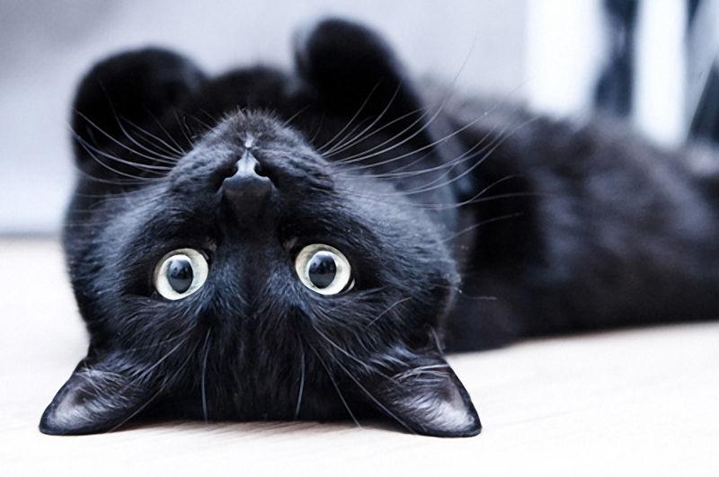 Фото с сайта cat-tube.ru