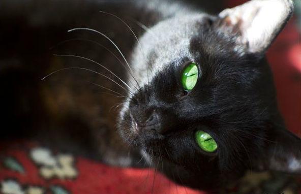 Фото с сайта mega-cats.ru