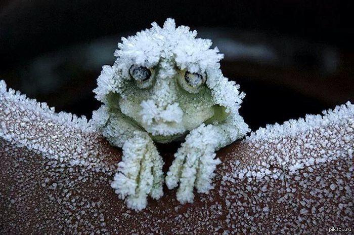 Смешная картинка про холод