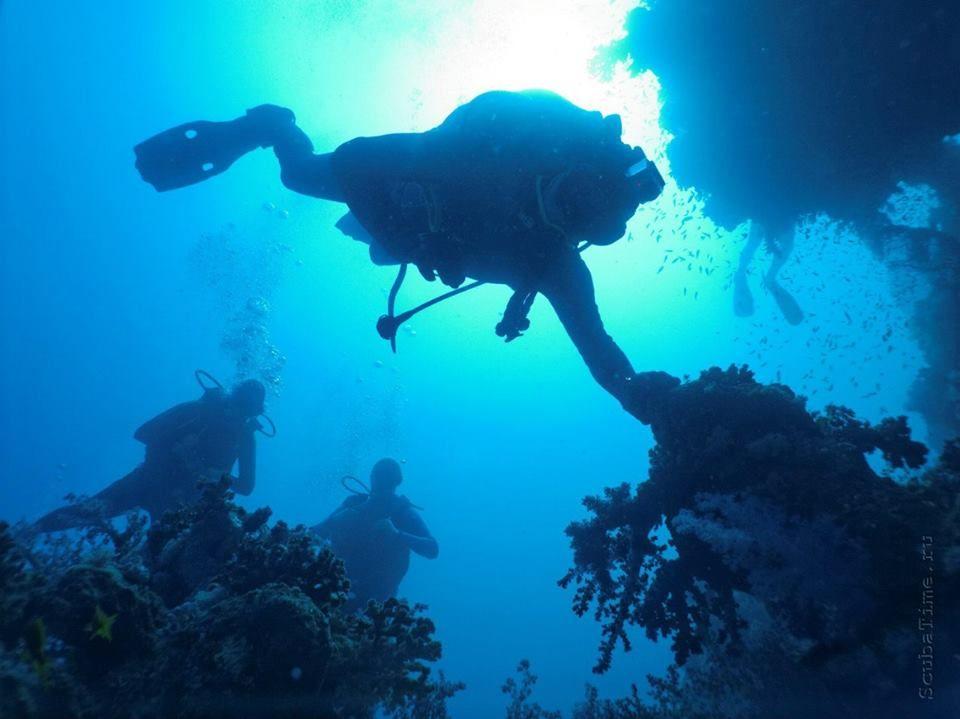 В морских пучинах. <i>Фото предоставлено Дмитрием Гореликовым <i />