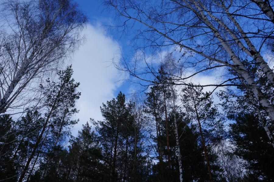 Погода в санкт петербурге на ближайший месяц