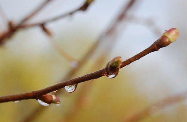 Синоптики прогнозируют дождливые выходные вВоронеже