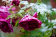 pervyj-sneg